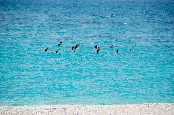 Albania Beach Jala Beach Vlora Albania
